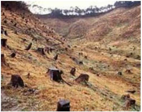 Causes of soil erosion tneutron for Soil erosion causes